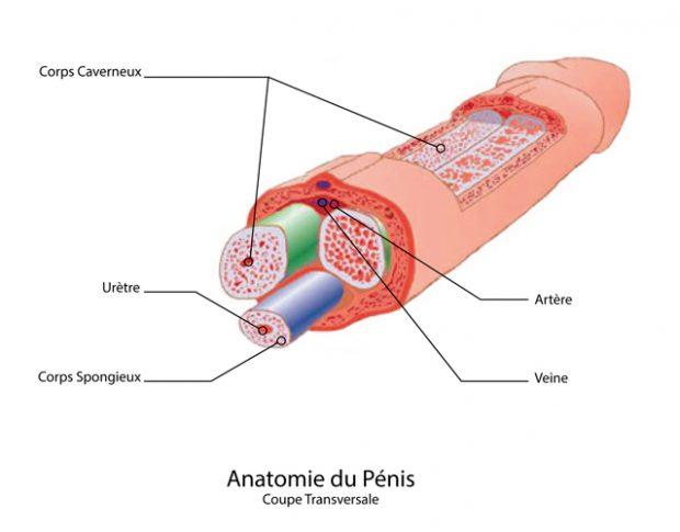 Douleur à la base du pénis